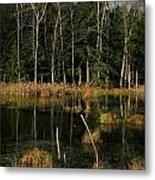 Swamp 2 Metal Print