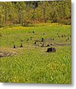 Swamp After Drout Metal Print