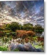 Swampy Metal Print