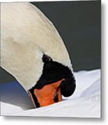 Swan - Soft And Fluffy Metal Print