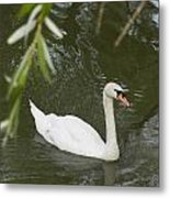Swan Enjoying A Swim Metal Print
