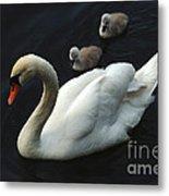 Swan Family 1 Metal Print