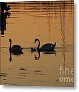 Swan Family At Sunset Metal Print by Camilla Brattemark