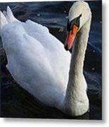 Swan Flying In The Water  Denmark Metal Print