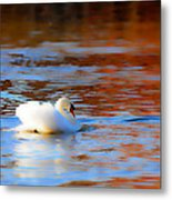 Swan Gold And Blue Metal Print