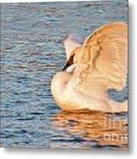 Swan In Golden Light Metal Print