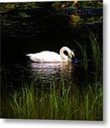 Swan In September Metal Print