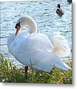 Swan In Sunlight Metal Print