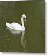 Swan Looking At Reflection Metal Print