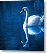 Swan On Lake Metal Print
