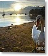 Swan On The Beach Metal Print