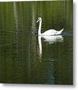 Swan On Wintergreen Lake Metal Print