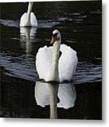 Swan Pair 2 Metal Print