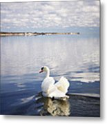 Swan Song Metal Print by Vicki Jauron