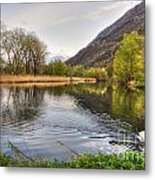 Swan Swimming On A Lake Metal Print