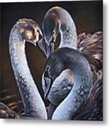 Swan Whispers Metal Print