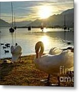 Swans In Sunset Metal Print