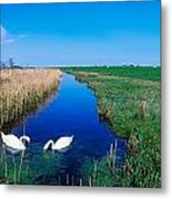 Swans On Bog, Near Newcastle, Co Metal Print