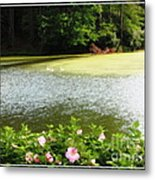 Swans On Pond And Hibiscus With Oil Painting Effect Metal Print