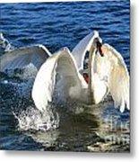 Swans Playing Metal Print