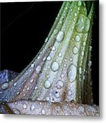 Sweet And Rainy Metal Print