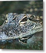 Sweet Baby Alligator Metal Print