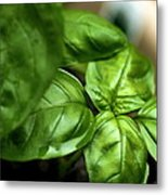Sweet Basil From The Garden Metal Print