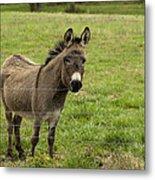 Sweet Little Donkey Metal Print