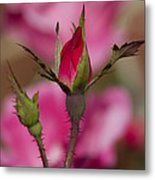 Sweet Little Rosebud Metal Print