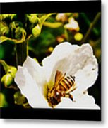 Sweet Nectar Shot Metal Print