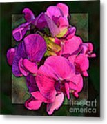 Sweet Pea Pop Out Photoart Square Metal Print