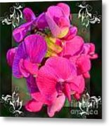 Sweet Pea Pop Out Square Metal Print