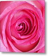 Sweet Pink Rose IIi Metal Print