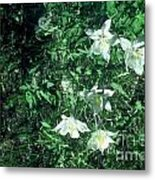 Sweet Summer Metal Print by Alcina Morello