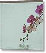 Swimming Orchids Metal Print
