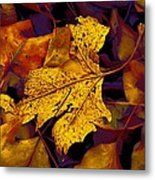 Sycamore Stands Out Metal Print