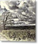 Sycamore Tree Cream Metal Print
