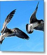 Synchronized Flying Metal Print