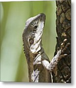 Ta-ta Lizard Metal Print