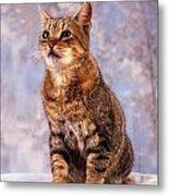 Tabby Cat Portrait Of A Cat Metal Print