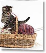 Tabby Kitten Playing With Knitting Wool Metal Print