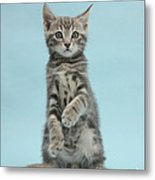 Tabby Kitten Sitting Up Metal Print