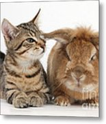Tabby Kitten With Rabbit Metal Print