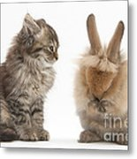 Tabby Kitten With Young Rabbit, Grooming Metal Print