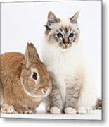 Tabby-point Birman Cat And Rabbit Metal Print