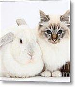 Tabby-point Birman Cat And White Rabbit Metal Print