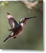 Tad Of Sunshine - Hummingbird Metal Print