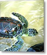 Tag Along Turtle Metal Print