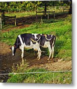 Tail Of Two Cows Metal Print