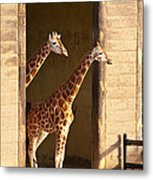 Taking A Look Metal Print by Bob and Nancy Kendrick